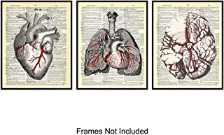 Internal Organ - Wall Art Prints on Dictionary Photo - Set of Three (8x10) Ready to Frame Vintage Photo - Steampunk - Cool Home Decor and Easy Gift Giving for Doctors and Nurses - Heart, Lungs, Brain