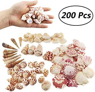 Weoxpr 200pcs Sea Shells Mixed Ocean Beach Seashells, Various Sizes Natural Seashells for..