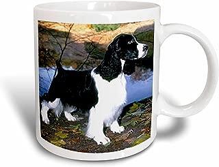 3dRose Black and White Springer Spaniel Mug, 11-Ounce
