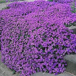 ADOLENB Seed House - Piedra Hierba Flores Semillas Raras