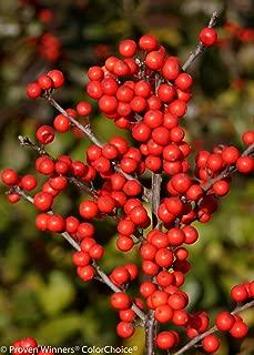 Best berry heavy winterberry Reviews