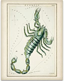 Scorpio Zodiac Antique Constellation Plate - 11x14 Unframed Art Print - Great Gift Under $15 For Astrology Enthusiasts