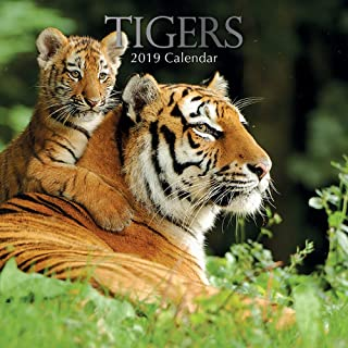 2019 Wall Calendar - Tigers Calendar, 12 x 12 Inch Monthly View, 16-Month, Jungle Animals Theme, Includes 180 Reminder Stickers