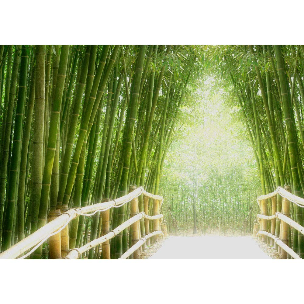 Amazon 不織布フォト壁紙 プレミアムプラス壁画 竹林 ジャングル アジア アジア アジア 竹 森林 グリーン No 0002 Non Woven 400x280cm Premium Plus グリーン Tftvlpp 0002 400x280cm 壁装用具