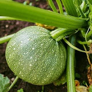 heirloom round zucchini