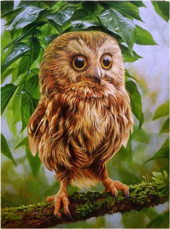 5d Diamond Embroidery Dealing full price reduction 5 ☆ popular Owl Rhinestone Kit Pa Cross Stitch