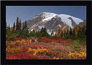WA, Mount Rainier NP, Deer grazing in Meadow by Don Paulson 12