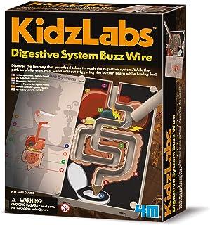 4M 403386 Digestive System Buzz Wire Educational Toy