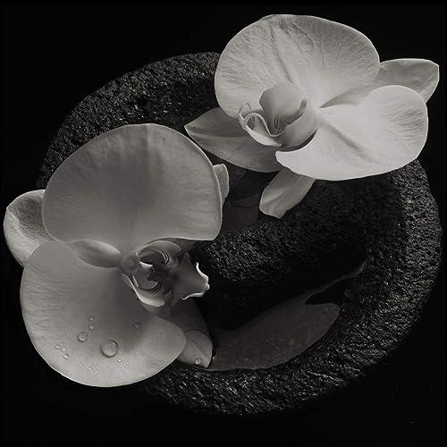 Corpse Flower [Explicit]