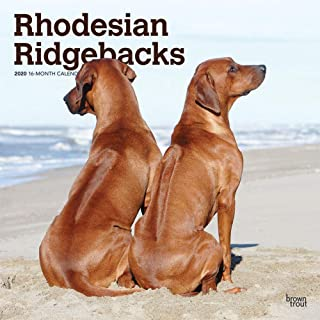 Best rhodesian ridgeback shop Reviews
