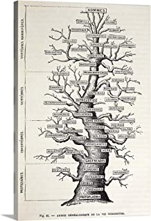 Best haeckel tree of life poster Reviews