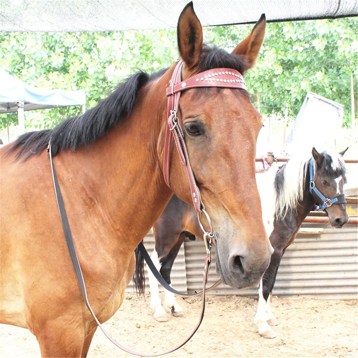 Leather Horse Seasonal Wrap Introduction Bridle Rein Ranking TOP5 Hal Riding Adjustable Equipment