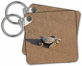 "3dRose Kemps Ridley Sea Turtle Baby, South Padre Island, South Texas, Juego de 2, 2.25 x 2.25"" (kc_279531_1)"