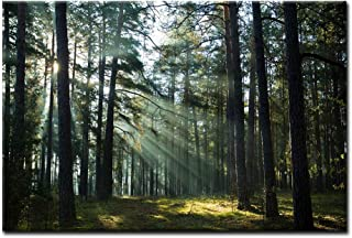 Sunshine Through Forest Wall Art Painting Pictures Print On Canvas Landscape The Picture for Home Modern Decoration