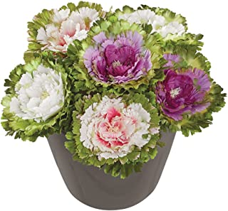 Artificial Faux Cabbage Rose Flower Stems, Multicolor (2 Each Purple, Pink and White) - Set of 6