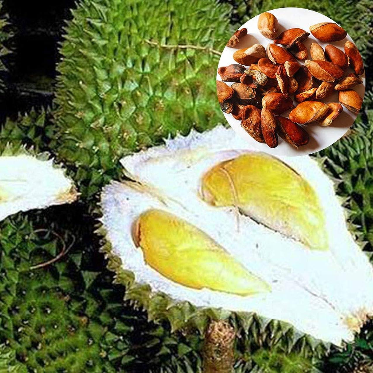 10 Durian Seed Rich in Vitamins Fruit Cooking Bonsai Garden Sweet Taste Rare Herbs Seeds Kitchen