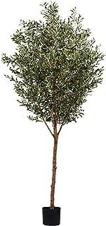 ديكور حديقة شجرة الزيتون الخضراء 1130-195 من ليتل جرين هاوس