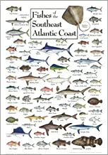 Poster - Fishes of The Southeast Atlantic Coast