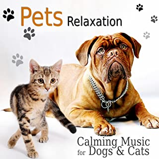 Pets Relaxation – Calming Music for Dogs & Cats, Gentle and Relaxing Songs to Calm Down Your Animal Companion