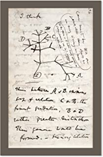 Best darwin tree of life poster Reviews