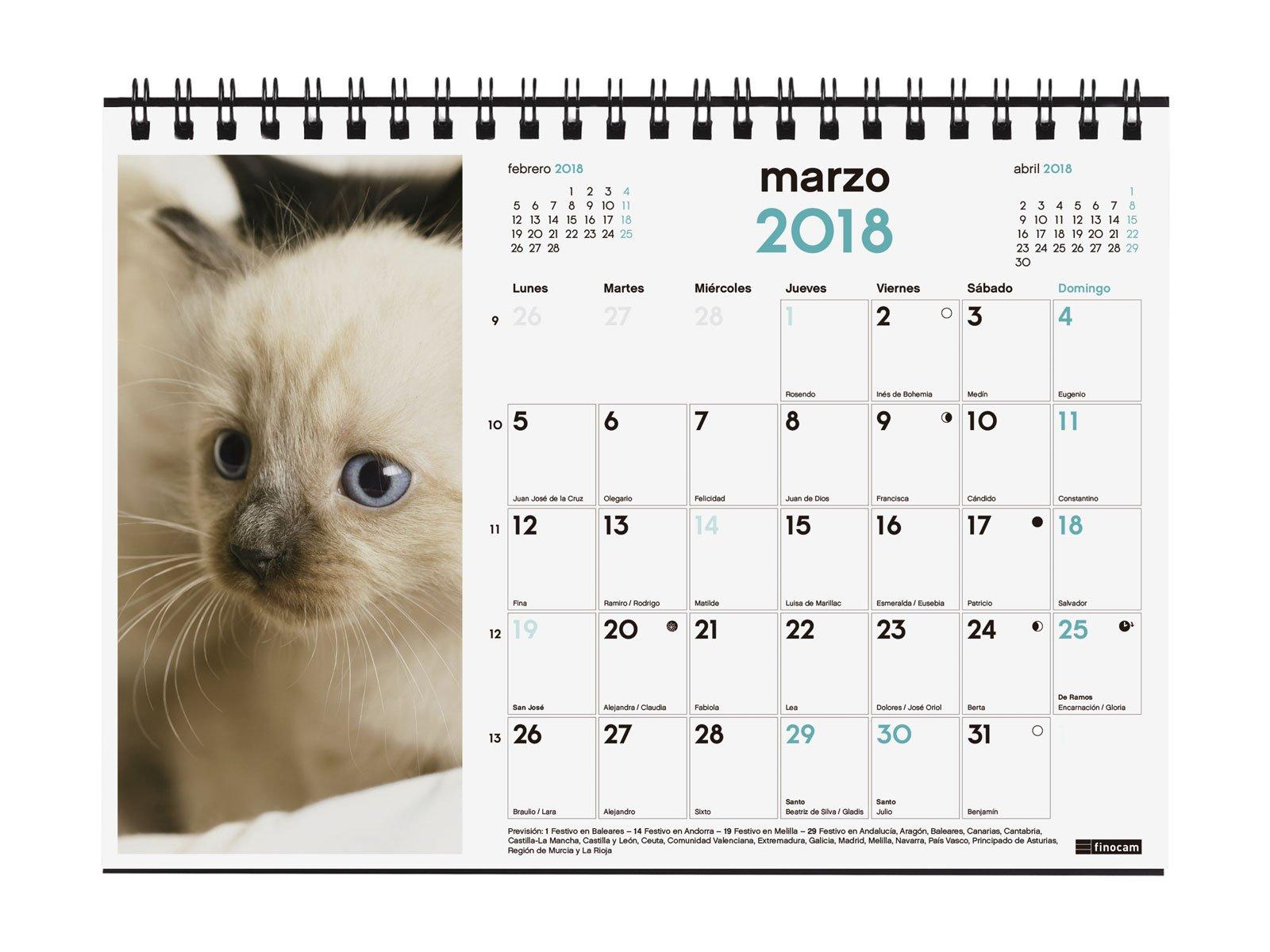 Finocam Imágenes - Calendario de sobremesa 2018, diseño gatitos, español, 210 x 150 mm, 150 g/m²: Amazon.es: Oficina y papelería
