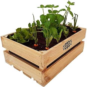 Caja de madera Huerto Urbano Vergea: Amazon.es: Jardín
