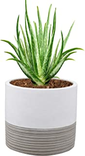 Brief Succulent Pots, 5 inch Diameter, 1 Pack Modern Cement Cactus Flower Aloe Snake Plant Planter Container with Drainage Hole, White (P003)
