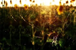 Rompecabezas Para Adultos 1000 Piezas Diy Spider Web Adult Juego De 1000 Piezas Con Regalo Educativo