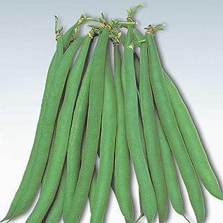 Masai Bush Bean Garden Seeds - 1000 Seeds - Non-GMO, Heirloom Baby French Filet Bean Vegetable Gardening Seeds