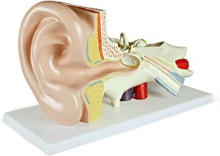 Vision Scientific VAE402-AN 3X Ear Model-3 Parts   Shows External, Middle & Inner Ear   Removable Pieces Eardrum with Malleus, Incus Stapes, Cochlea with Nerves & Labyrinth with Vestibular   W Manual