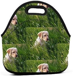 黄色のラボ子犬グラスランチバッグ断熱サーマルランチトートアウトドア旅行ピクニックキャリーケースランチボックスハンドバッグ付きジッパー