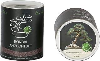 Seedeo Bonsai Geschenk - Set Japanische Schwarzkiefer (Pinus