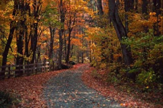 Wallmonkeys Autumn Country Road Wall Mural Peel and Stick Graphic (36 in W x 24 in H) WM163808