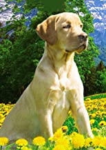 Labrador Loyal Dog DIY 5D Diamond Painting Kits for Adults Kids Wall Painting Gift Arts and Crafts Painting by Numbers for...