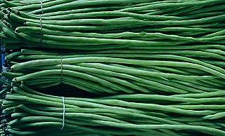20 Korn / bag der chinesischen lange Bohnen Bohnen Samen, Sc
