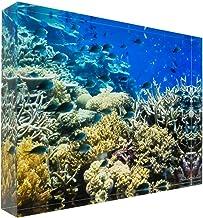Fish on Tropical Coral Great Barrier Reef Acrylic Block Photo Print Carl Chapman 0911 (30x20x3cm (12x8x1.2in))