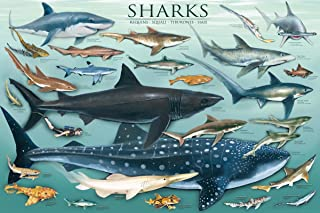 Sharks Educational Poster Hammerhead Whale Great White Thresher 24x36