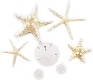 Florida Shells & Gifts: Sea Life Sampler: Starfish and Sand Dollars (7 Piece Set) Beach Decor Crafts Art