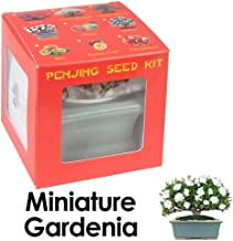 Eve's Garden Dwarf Gardenia Penjing Seed Kit, the Chinese Art of Bonsai, Complete Kit to Grow Flowering Dwarf Gardenia Penjing from Seed