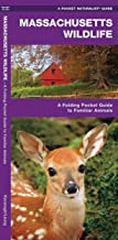 Massachusetts Wildlife: A Folding Pocket Guide to Familiar Animals (Wildlife and Nature Identification)