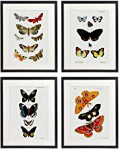 IDIOPIX Vintage Insect Butterfly Moth Home Decor Wall Art Print Set of 4 Prints UNFRAMED No.10