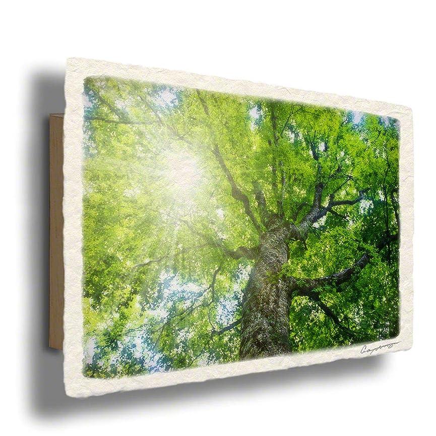 ダニ概要家和紙 アートパネル 木製パネル付 緑 グリーン 木 森 「木漏れ日と新緑のブナの大木」54x36cm 絵 絵画 インテリア 壁掛け 壁飾り 風水 玄関