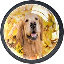 Keukenkast Knoppen - Golden Retriever Hond Geel - Knoppen voor dressoir Laden voor kast, kast, badkamer of kantoor - Pack ...