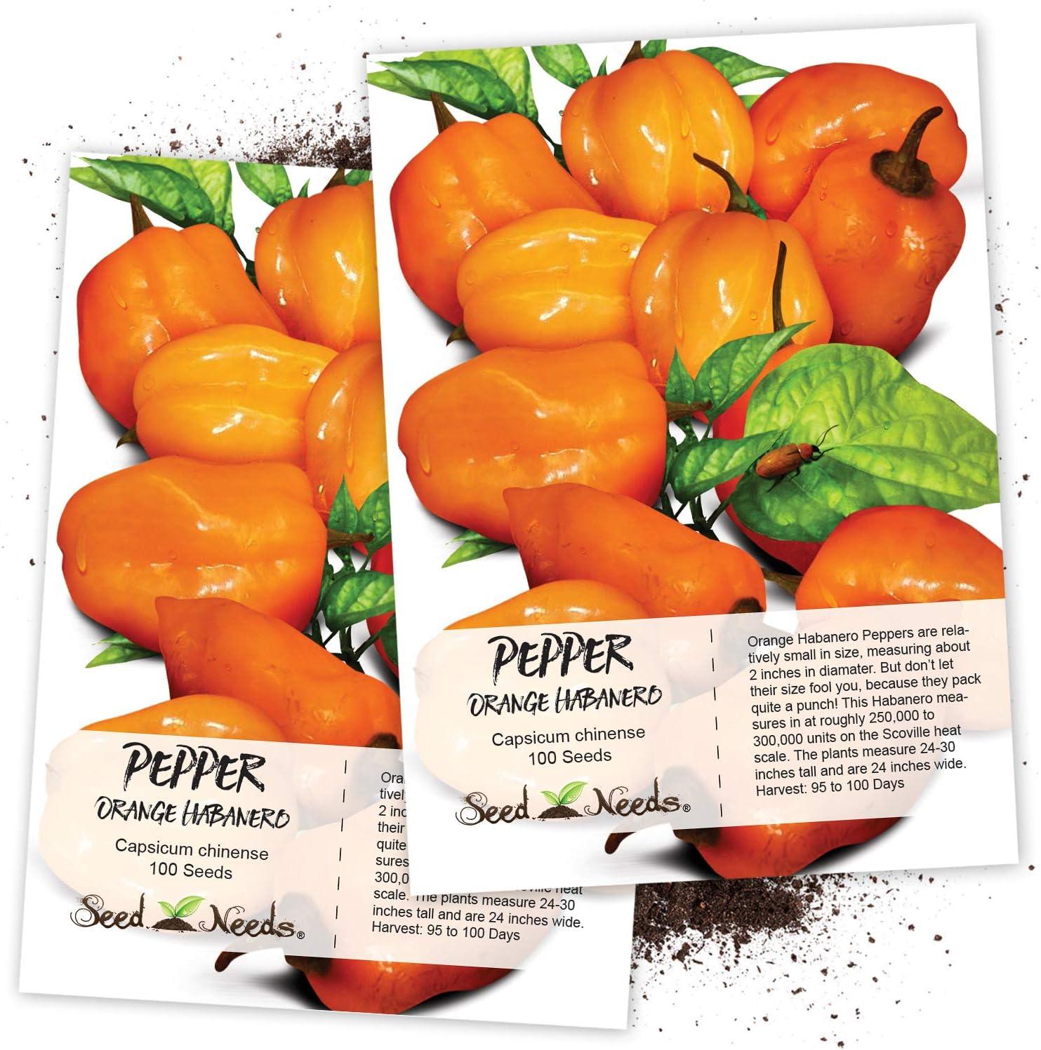 7 Pot Orange Hot Pepper Organic Non-GMO 12 Seeds