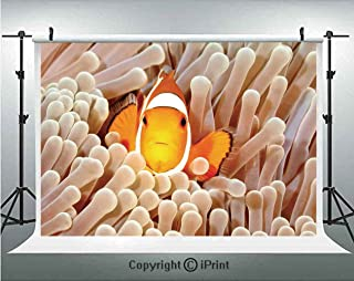 Ocean Decor Photography Backdrops Clown Fish Swimming in Tentacles in the Pacific Ocean Bali Indonesia Marine Wildlife,Birthday Party Background Customized Microfiber Photo Studio Props,7x5ft,Beige Or