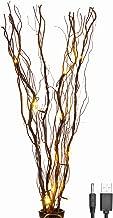 Best paper birch bonsai Reviews