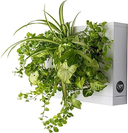 Amazon.fr : tableau-vegetal