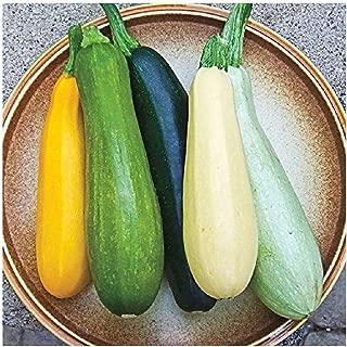 David's Garden Seeds Zucchini Summer Melody SL9111 (Multi) 50 Non-GMO, Heirloom Seeds