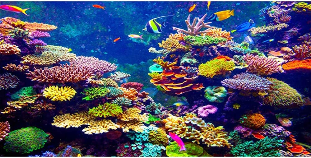CSFOTO Aquarium Background Coral Tropical Direct store Underwater Beauty products Fishes Worl