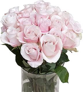 Green Choice Fresh Flowers bulk | 24 Light Pink Roses Fresh Cut Flowers For Delivery Prime Fresh Bulk Flowers | Birthday Flowers | (2 Dozen) - 20 inch Long Stem Flower Cut Direct from Farm